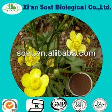 10:1 Ranunculus ternatus thunb.