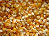 YELLOW MAIZE FOR ANIMAL FEED