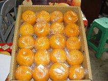 Sweet Fresh mandarin orange Good Quality