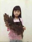agarwood, chen xiang, kayu gaharu