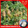 HIgh Quality of Griffonia Extract Powder 5-HTP --Supplied by Shaanxi LLT Industries