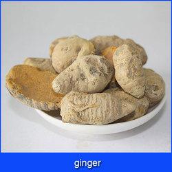 buyer of ginger
