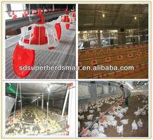 etlik piliç yemlik için otomatik yemleme sistemi tavuk çiftliği