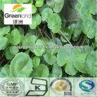 Gotu Kola extract 10-90% Asiaticoside