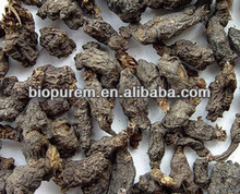 Semiaquilegia Root Extract 10: 1 for Health