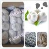 fresh nature garlic in 10kg/carton for sale