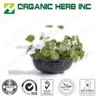 Organic Herb Inc supply Gotu kola extract / gotu kola extract powder / centella asiatica extract
