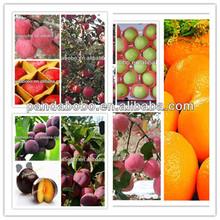 2013 frozen plums on hot sale
