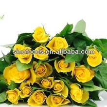 mei gui seed flower SEED hot sell yellow flower seeds