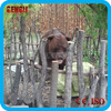 Animal theme park high simulation fiberglass life size bear statues