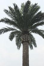 Hot sale indoor or outdoor Artificial palm tree