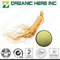& naturel de haute qualité poudre de racine de ginseng ginsenosides avec