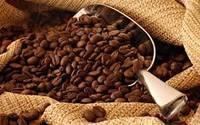 Arabica and Rubosta Coffee
