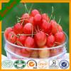 Natural high quality SD Spray dried Cherry Powder -Fruit powder Cherry juice powder