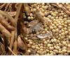 Soybean, crop 2014