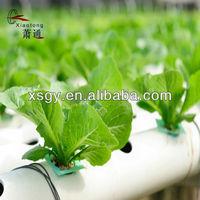 Eco-friendly cultivo hidroponico en tubos de pvc
