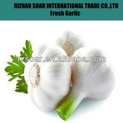 2013 chinese fresh garlic