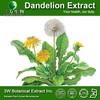 Food Grade Supplement Dandelion Root Extract 100% Nature Dandelion Extract Mongolian Dandelion Herb Extract