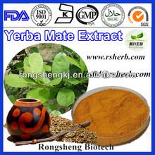 Yerba Mate Extract Powder
