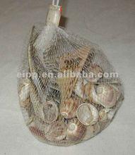 natural home decoration seashells