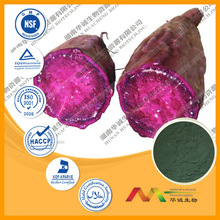 GMP Supplier Anthocyanidins Series purple sweet potato p.e.