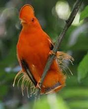 Tropical birds & reptiles