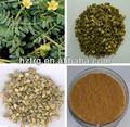 Mais vendável saponinas esteroidais/saponinas natural em massa