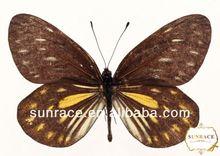 butterfly decorations for weddings glitter butterflies