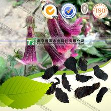 Raw Material Rehmannia glutinosa Libosch