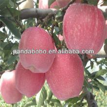 2014 new crops fresh fuji apples in china export to india /dubai/bangdalesh