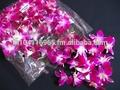 De orquídeas suelto bloom- de primera calidad @ mejor precio tratar de nosotros!!