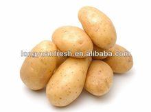 supply fresh Holland 7 potato