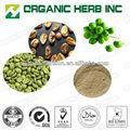 녹색 커피 콩 추출물 제조