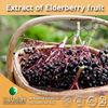 100% Natural Extract of Elderberry fruit / Elderberry fruit dry Extract / Elderberry fruit Powder