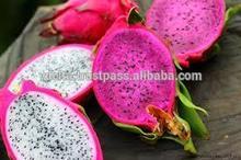 Vietnam Dragon Fruit_New crop, Good price