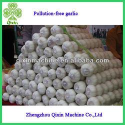 Pollution-free pure natural garlic