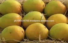 Fruit Mangoes/ Alphonso Mangoes