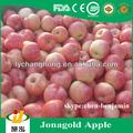 cina mela jonagold per il mercato russia