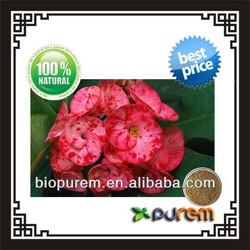 crown of thorns flower extract