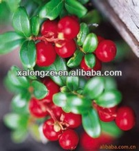 Free Sample plant extract 25% anthocyanidins C3G Vaccinium vitis-idaea extract Lingonberry P.E.Lingonberry Extract