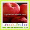 china fuji apple exporter fuji apple price export to libya fuji apple in china