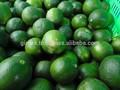 الليمون الأخضر vietnam2014 عالية الجودة