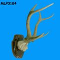 Hueso cuerno del cráneo del Polyresin cuernos de venado para la venta