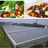 vegetable drying system fruit solar dryer home fruit drying machine