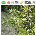 Juniper berry extract/zimbro extrato/bagas de zimbro extrato de pó