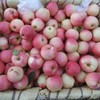 high quality fresh apple exporter for india /bangladesh