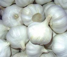 00971561840750,,,Fresh Garlic