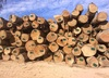 Keruing wood logs, solid Keruing sawn timber, Keruing hardwood lumber