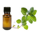 Pure Oregano Oil