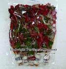 Ludwigia Peruensis Diamon Live Aquatic Plants Wholesale / Thailand Aquatic Plants Exporter